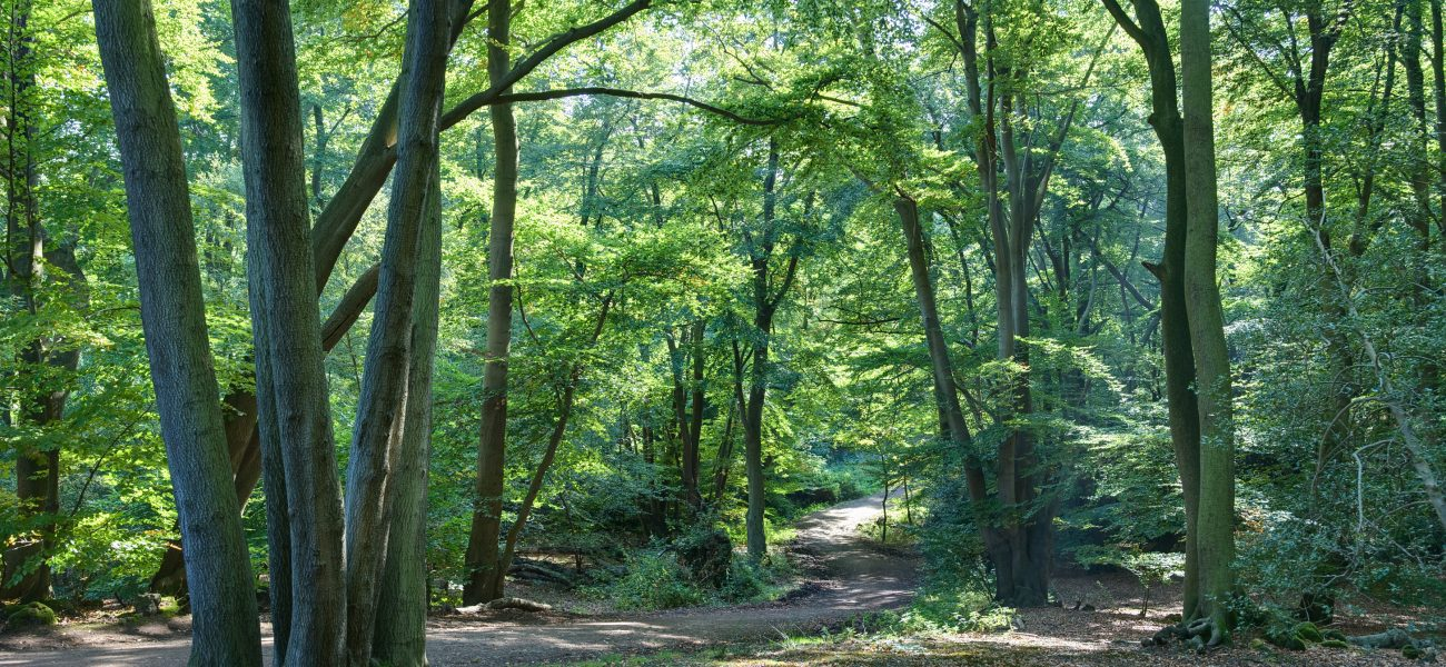 gsce epping forest coursework