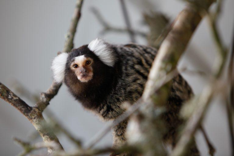Close up of a monkey.