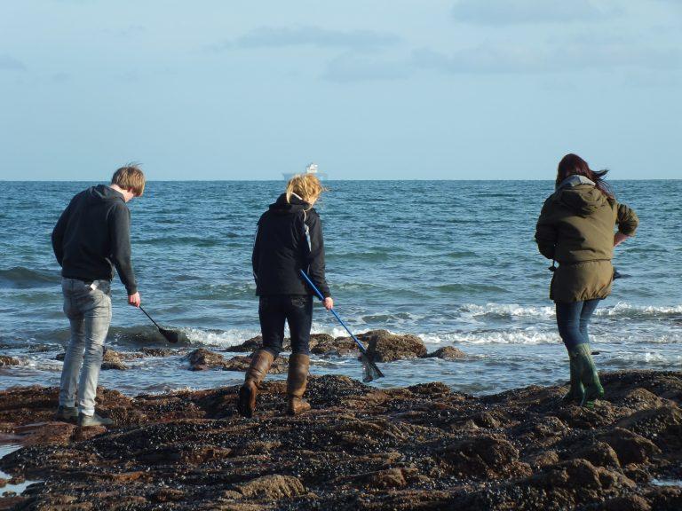 Students examining rockpools.
