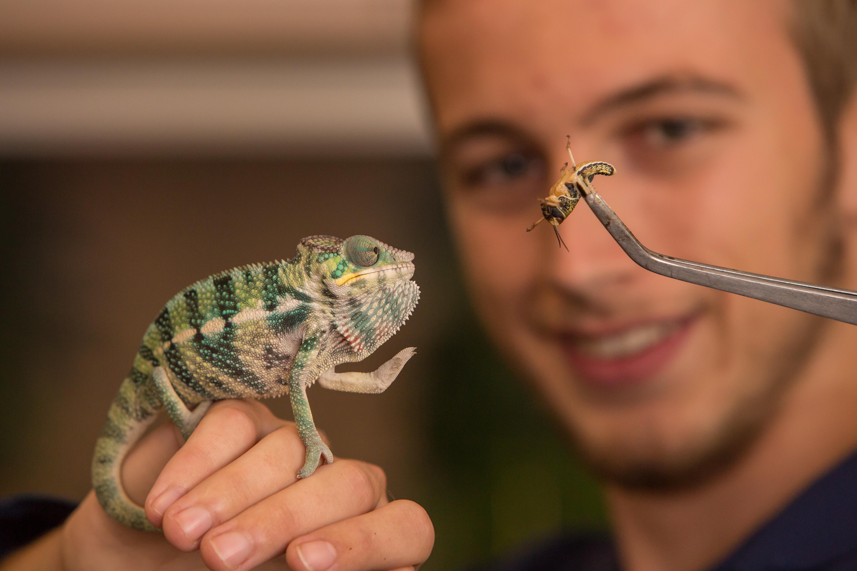 Student feeding chameleon.